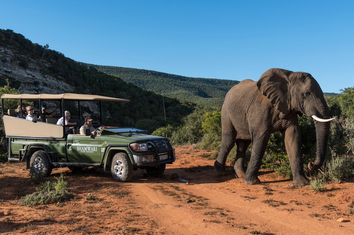 This week's G'Day with Ian Swain features @ShamwariReserve in South Africa sharing the stunning refurbishment of their lodges, what sets a Shamwari game drive apart, and the conservation work of Shamwari Wildlife Rehabilitation Centre.  https://t.co/FtPGhPFOhn https://t.co/HsvmDmN8r7