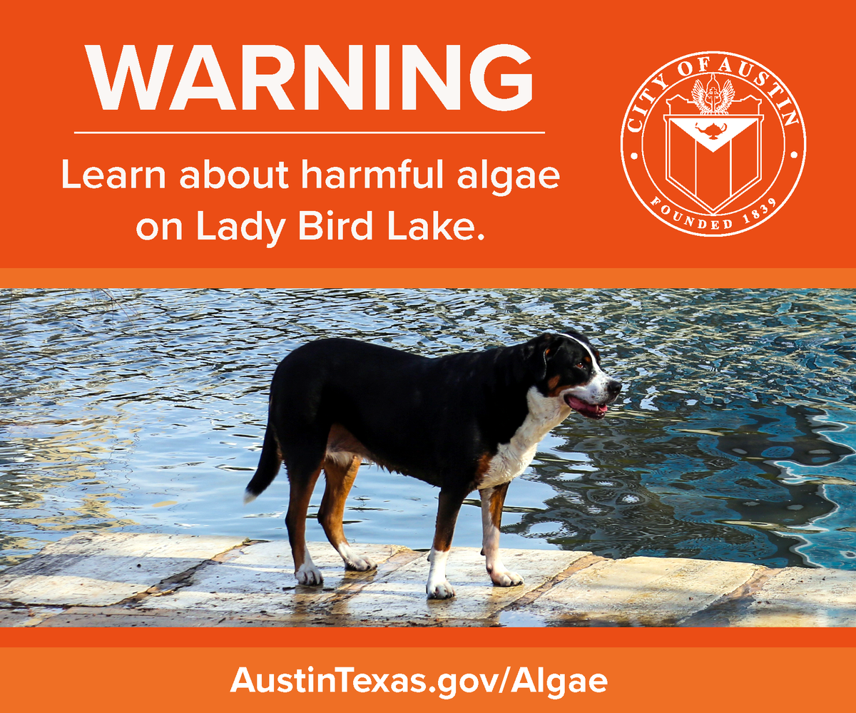Harmful toxins have now been detected in blue-green algae at Auditorium Shores as well as Festival Beach + Red Bud Isle. Do not allow dogs to swim in Lady Bird Lake or drink the water. Avoid stagnant areas of the lake + don't handle algae. Info + updates: AustinTexas.gov/Algae