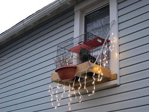 Replying to @kenzhadley: i'm so happy cat balconies exist