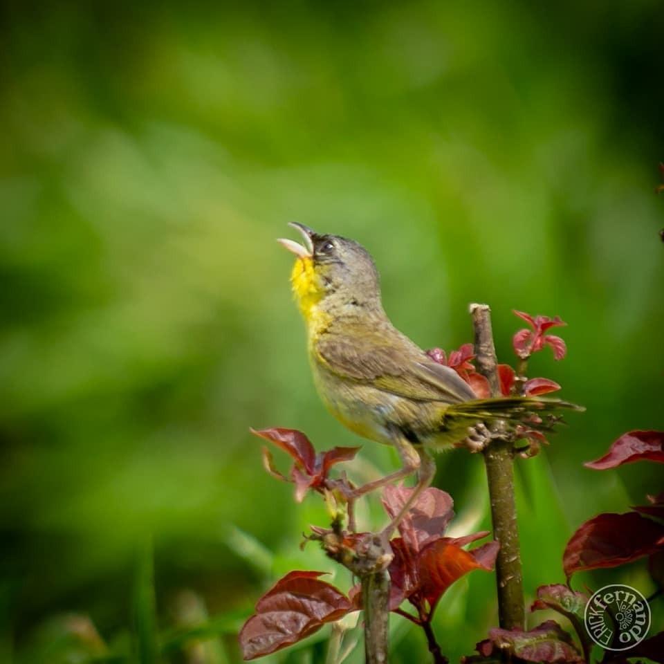 #naturaleza #campo #aves #animales #instagramers #instalike #guatemala #instagood #instanature https://instagr.am/p/CDhu4cfA4Sf/pic.twitter.com/aT1LjJpMur