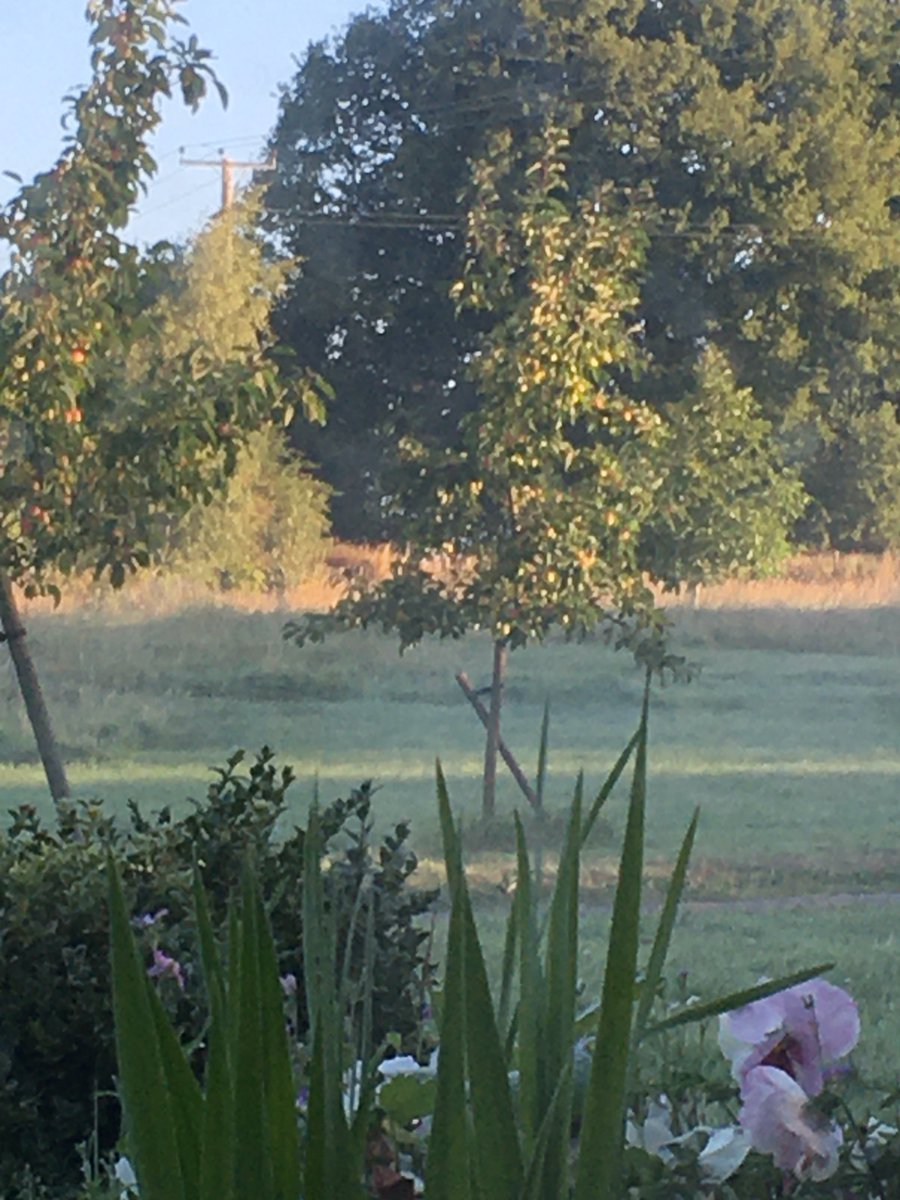Misty morning in Haven.  Early start to bottle our Pink Grapefruit Gin. Deliveries later! #herefordshirepic.twitter.com/lqhh1LSpSM