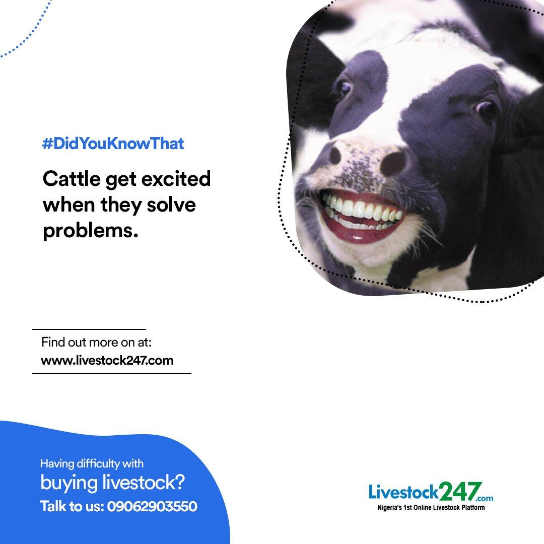 #DidYouKnowThat - Cattle get excited when they solve problems. #livestock247 #livestock #livestockfarming #livestockbusiness #agritech #farming #agriculturepic.twitter.com/irKFmxgmIB