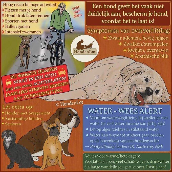 Tip van de dierenambulance mbt tot uw hond en de hittegolf voor komende dagen. https://t.co/P6HvBHz4YM