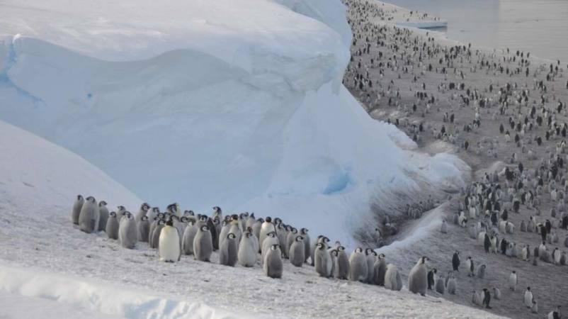 Con satélites hallan nuevas colonias de pingüinos emperador en la Antártida►https://t.co/6HrfPZK2zE https://t.co/rMm77iCaCy