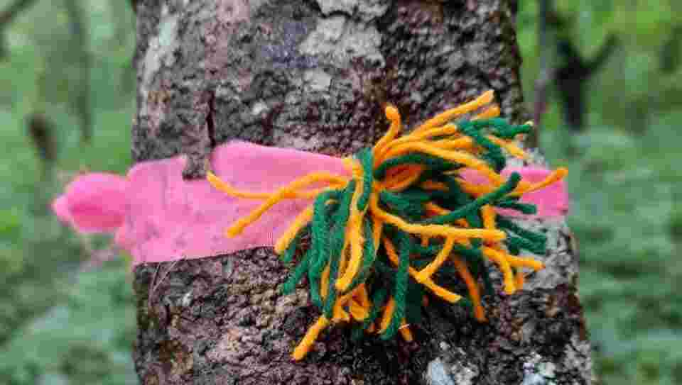Villagers tie 'rakhis' to trees in protest against setting up of IIT-Goa campus https://bit.ly/2PvZABL Located in Goa's eastern corner at the foothills of the Western Ghats, the land chosen for the campus is thickly forested, interspersed with cashew trees that the villagers c…pic.twitter.com/lIvpWNgSvL