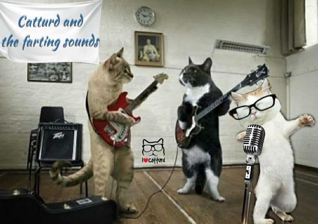 """Catturd ™ on Twitter: """"Coming soon ... Catturd and the Farting Sounds - to  take over the music industry.… """""""