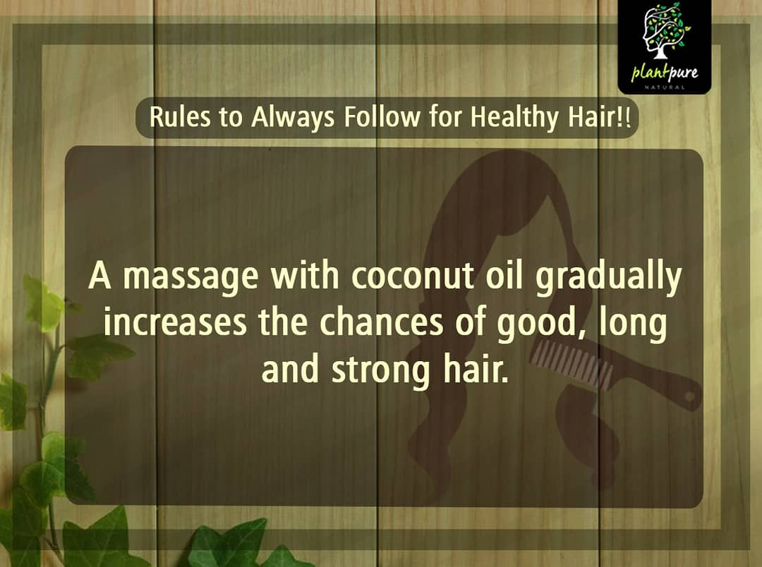 Rules to follow for healthy hair coconut oil  increases the chance of long, strong hair growth as they are packed with essential vitamins that are necessary for scalp health https://plantpure.in/ #hairgrowth #chemical free #stronghair #natural #naturalingredients #coconutoilpic.twitter.com/40gf0fYvfh