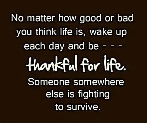 No matter how small it may seem wake up each day and be thankful for everything and everyone that surrounds you #ThankfulThursday #thursdaymorning