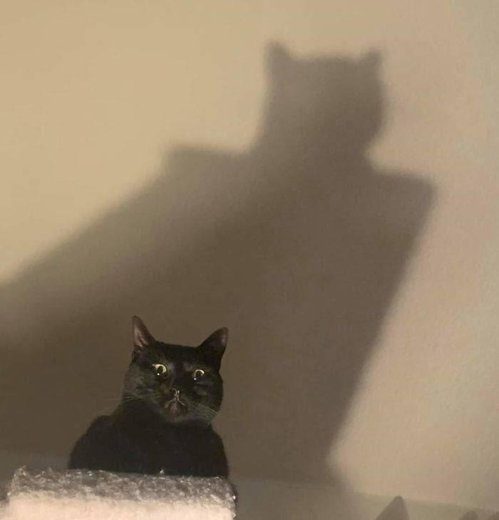 """I must go, Gotham needs me."""