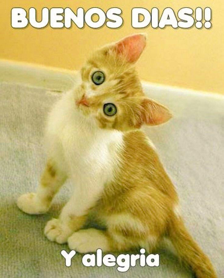 """Buenos días Feliz y Bendecido Jueves """" Un gato te acaricia el alma con su Ronroneo """" #6Agosto #FelizJuevesATodos #saludoplanetario #AmorSincero #AmorDeFamilia #ayudarnoshacebien #AdoptaParaTodaLaVida #AdoptaYCambiaUnaVida #AmorSincero #YoMeQuedoEnCasapic.twitter.com/Tc7moxIWoW"""