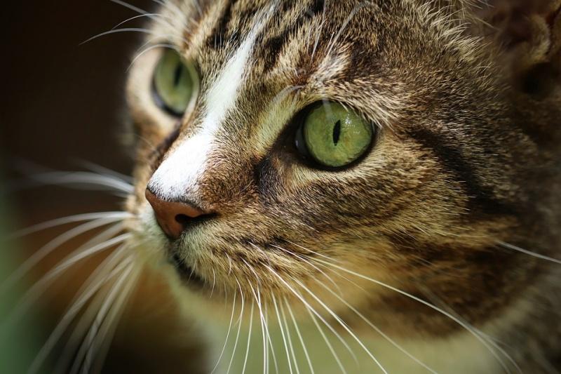 El 8 de agosto se celebra el Día Internacional del gato 🐈🐈🐈 #DiaInternacionalDelGato