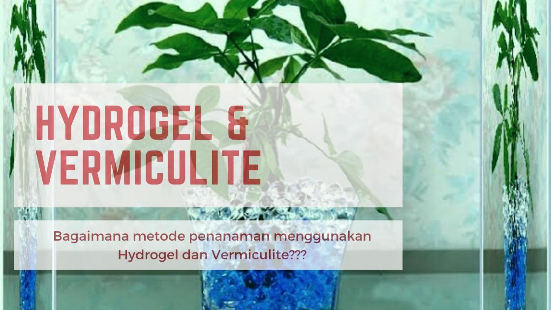 Haloooo sobat HOTersss saatnya kita untuk melanjutkan pembahasan kita terkait hydrogel dan vermiculite. Skuy kita lihat hihihi https://hidroponikasik.wordpress.com/2020/08/06/cara-penanaman-menggunakan-hydrogel-dan-vermiculite/…pic.twitter.com/UrLMSaflFP