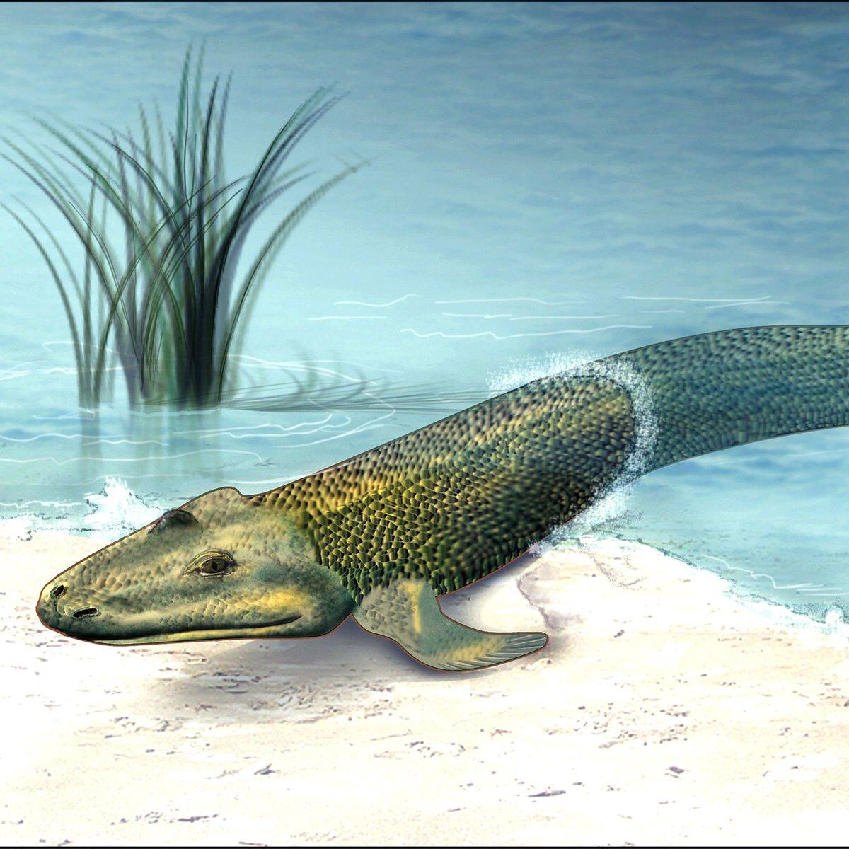 375 million years ago we were a walking fish.