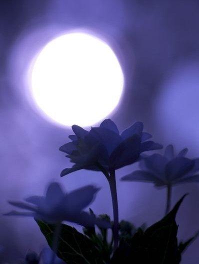 Good night everyone. #nature #NaturePhotographypic.twitter.com/LbnDVaeVLm
