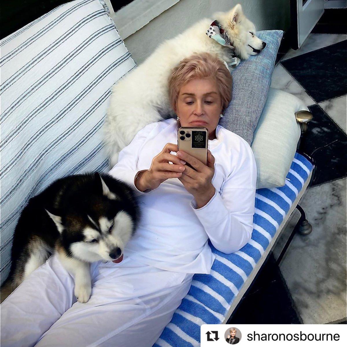 Summer has officially kicked off at the Osbourne household! #PuppyPower 🐶🐱 📷: @MrsSOsbourne https://t.co/U7kihtfg21