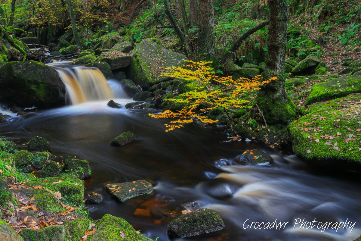 Looking forward to Autumn when hopefully more of this is behind us and we can explore nature in its most beautiful.  #autumn #nature #fall #photography #love ##naturephotography #photooftheday #autumnvibes #travel #padleygorge  #beautiful #leaves #autumncolors  #chasingwaterfallspic.twitter.com/fPapL7yaKE