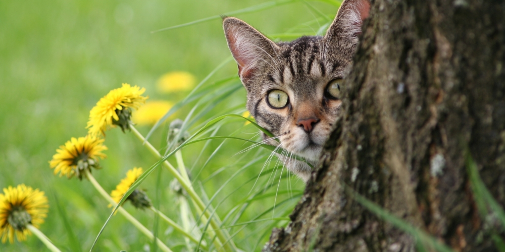 WOW   #instacats #instapet #tagsforlikes #thedailykitten #instacat #photooftheday #cat #catclothes #catattire #kot #gatopic.twitter.com/wth1IeYS62