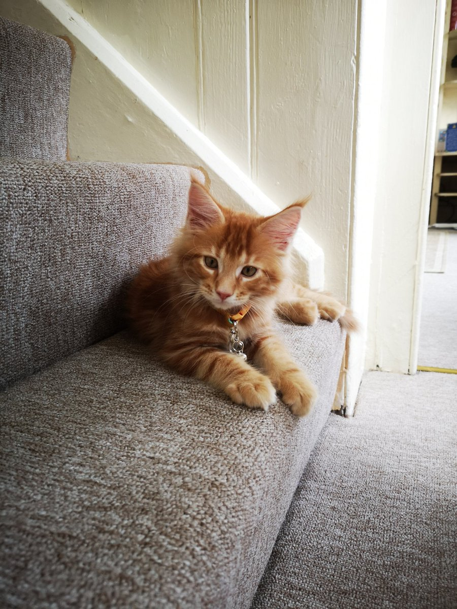 Twm Siôn Cati has found a number of comfortable spaces in the house, but he looks most handsome on the stairs.