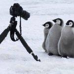 カメラの前で人間に対して警戒心を示さないペンギン!