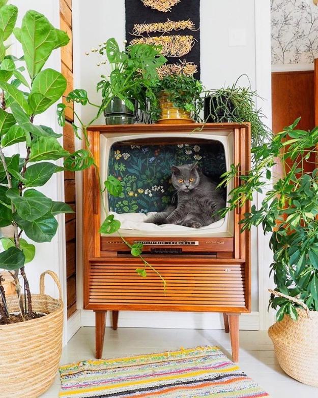 把舊式電視改造成貓的床 EexmQ7CUMAA8Q8o
