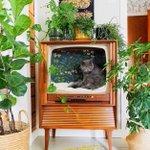 古いテレビを改造した結果…ネコ用ベッドにぴったりだった!