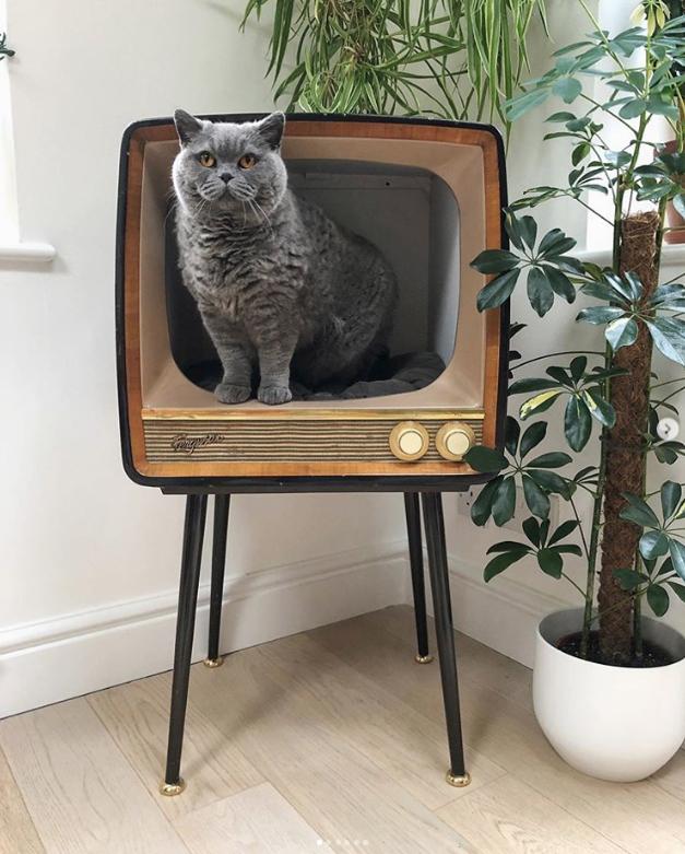 把舊式電視改造成貓的床 EexmR0EUMAAnzwm