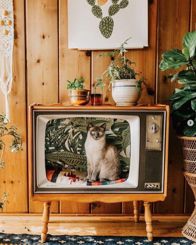 把舊式電視改造成貓的床 EexmSXQU8AArhLP