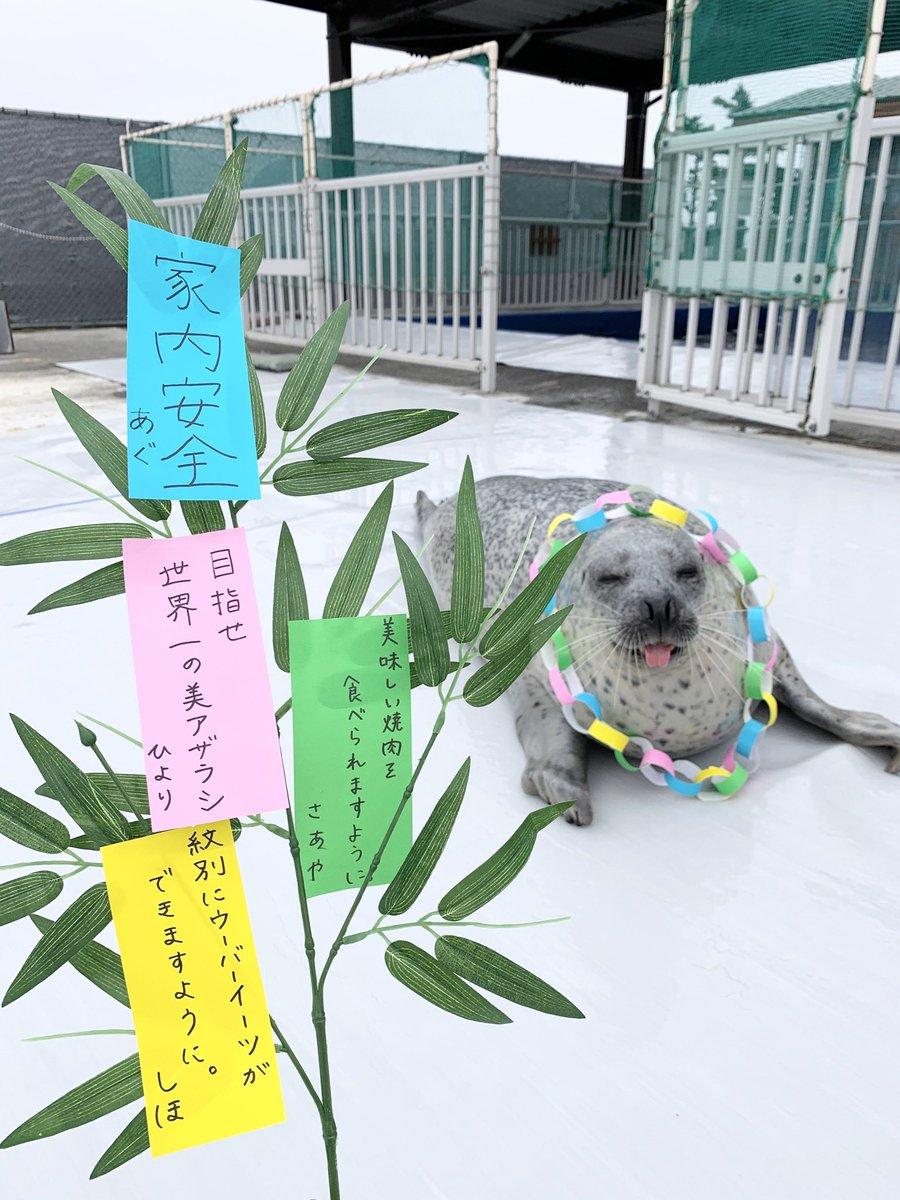 北海道では今日が七夕🎋🌟あぐくん、ひよりちゃん、飼育員の夢が叶いますように…🥰