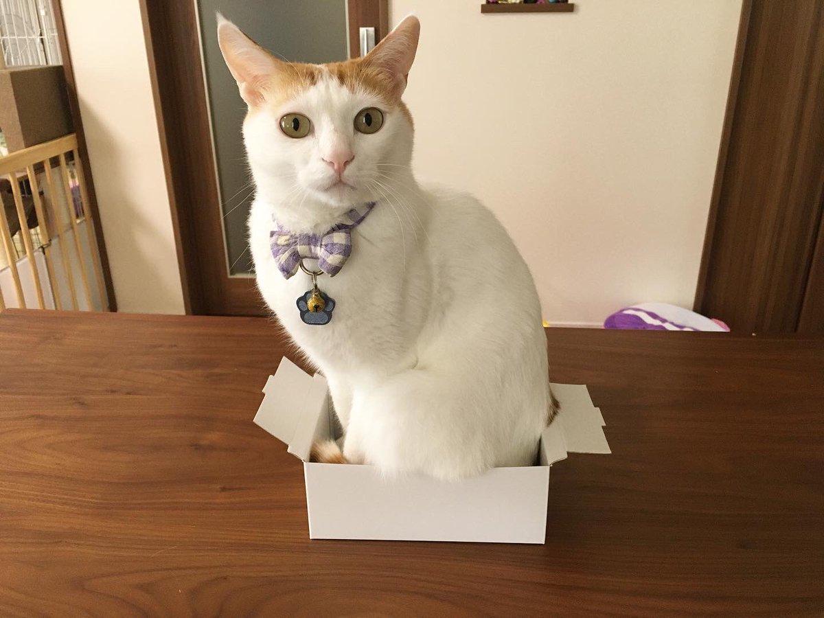 絶対入れないと思ったけどなんとかして入れちゃうのが猫なんだなぁ