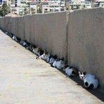 猫も今年の夏は、我慢できないらしい・日陰に避難している猫たち!!