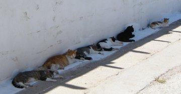 猫も今年の夏は、我慢できないらしい・日陰に避難している猫たち!