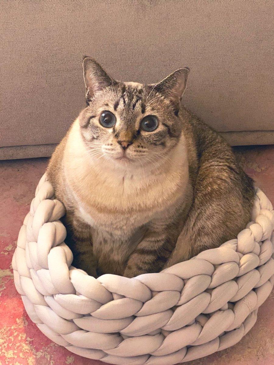 夏用のやや涼しい猫用ベッド買ったつもりが、想像より小さくて完全に果物についてる編み編みネットにしかみえん🍎🍑