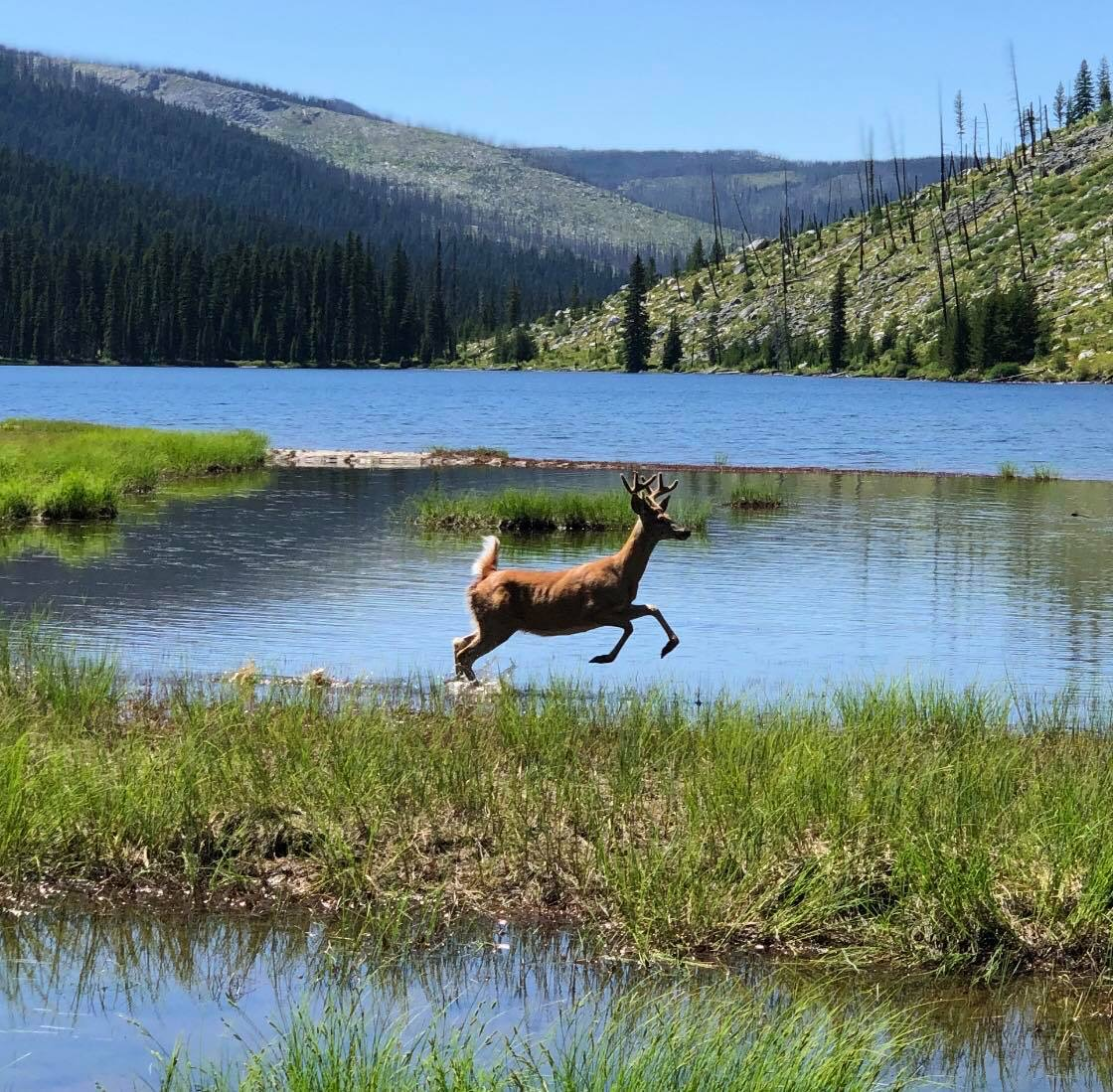Awesome pic taken by my buddy @jbrunsfeld on Aug. 4, at Big Sandy Lake in the Bitterroot Wilderness, Idaho.