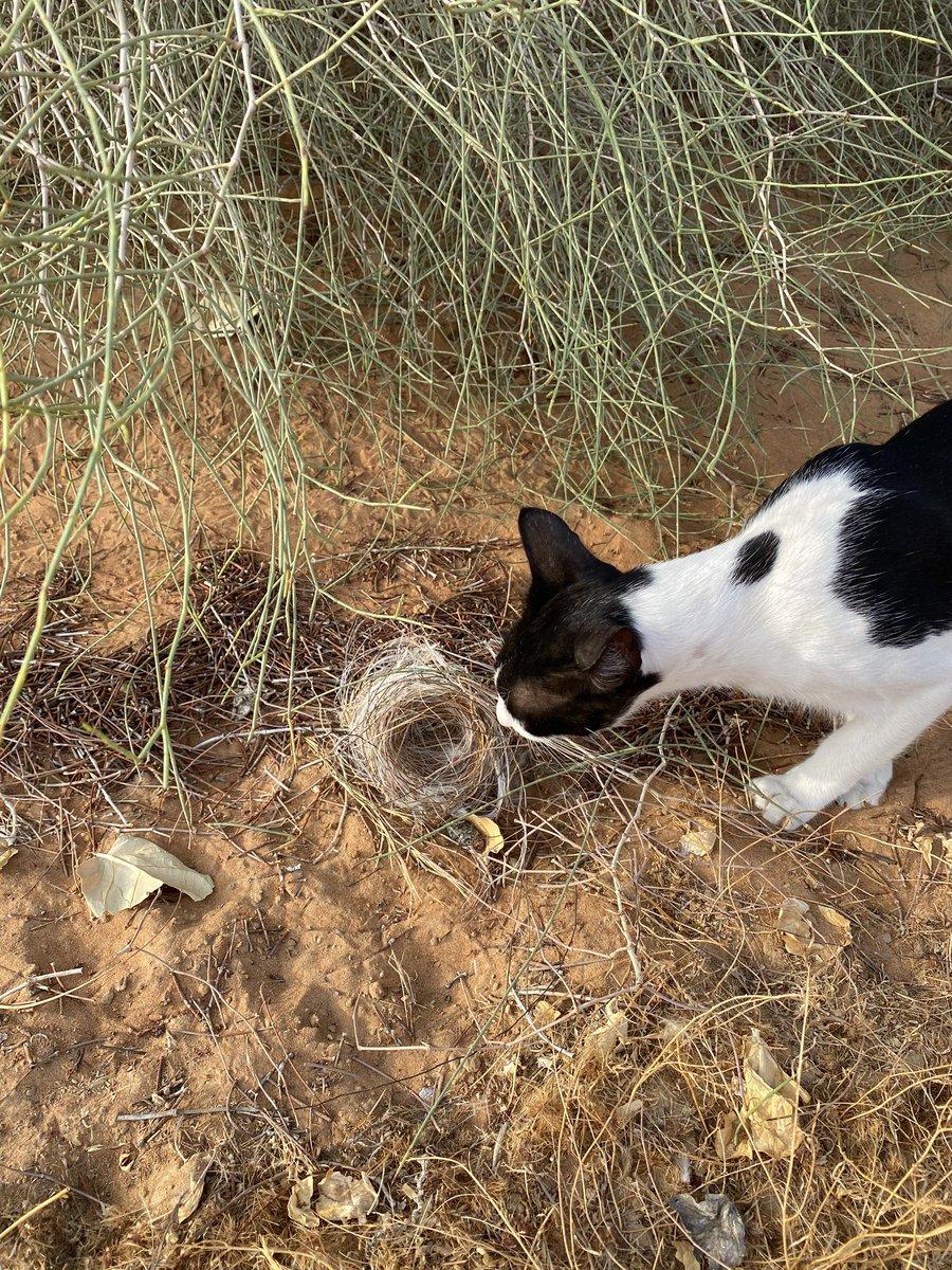 落ちていたヒヨドリの巣。半分以上がプラスチック。