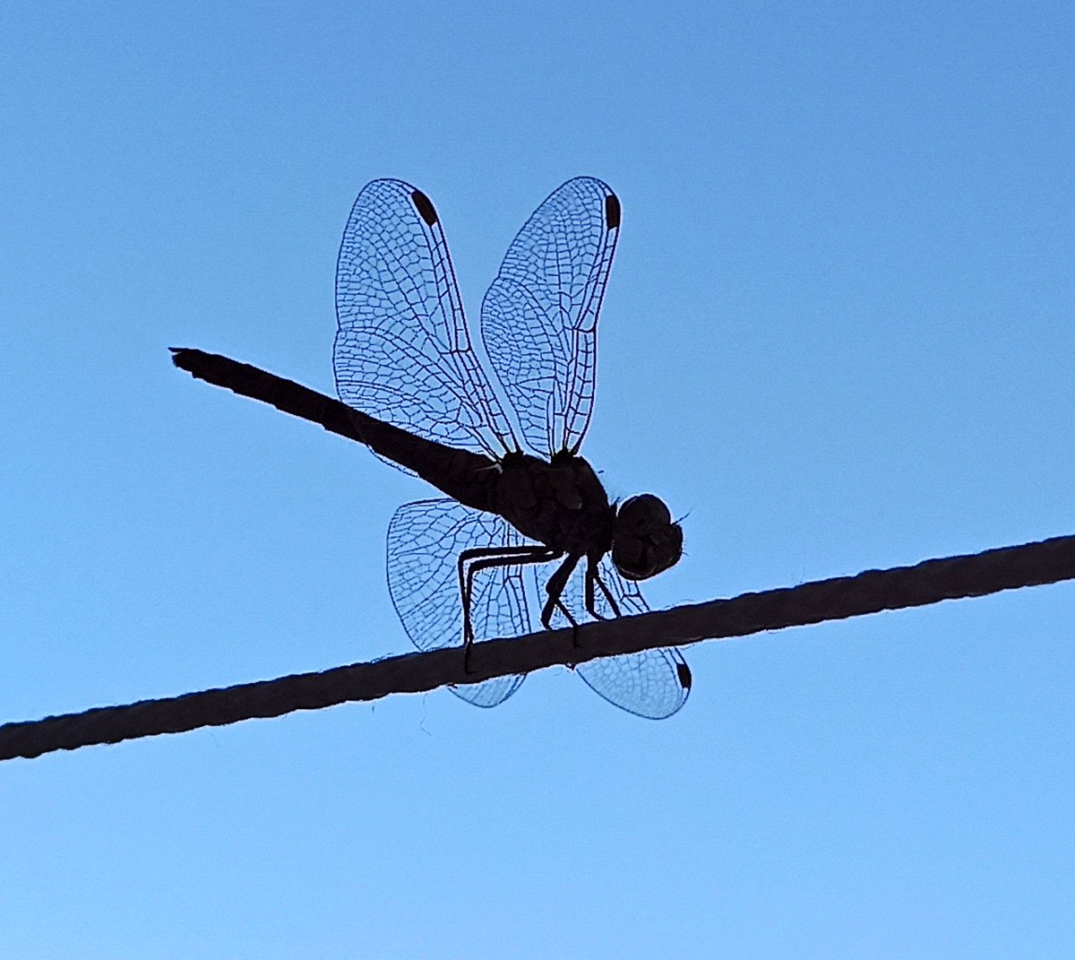 Morning guest... #dragonfly #traveling #natureloverspic.twitter.com/ExbuSZNLFs