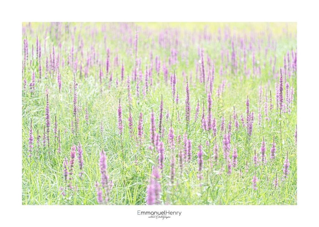 XX - CCXLVII - Pastels   #abstrait, #Art, #EmmanuelHenry, #fleur, #france, #france_focus_on, #minimalisme, #nature, #nikon, #nikonfr, #NikonTeam, #photooftheday http://www.emmanuelhenry.compic.twitter.com/vBck2dahKh
