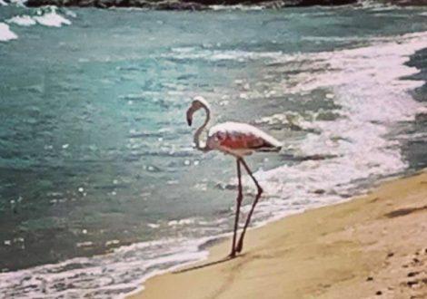 """Un fenicottero rosa sulla battigia di Marina di Priolo, """"qui non ci sono solo ciminiere"""" - https://t.co/2FXVNLpu3v #blogsicilianotizie"""