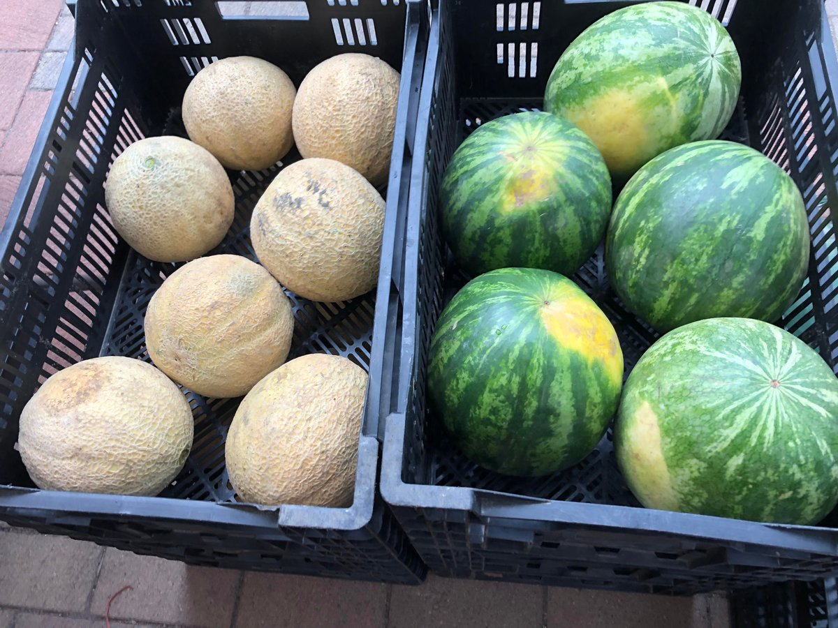 Withrow Market On Twitter Farmer Bob Is Bringing A Special Treat To The Market This Saturday Red Yellow And Orange Watermelons And Aromatic Cantaloupe We Enjoyed A Yellow Watermelon Last Weekend Ask anything you want to learn about k.cantaloupe by getting answers on askfm. twitter