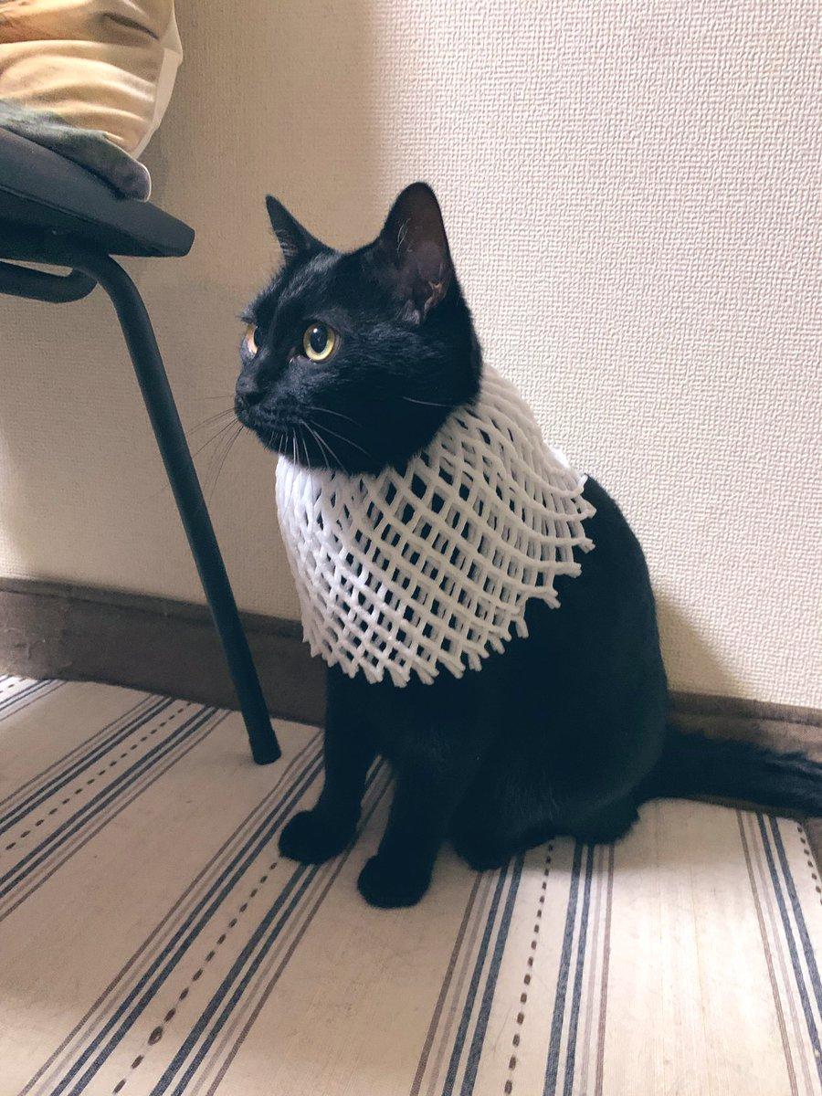 當你的貓想要成為埃及神貓的時候…… Ef26i1GU0AAMvYR