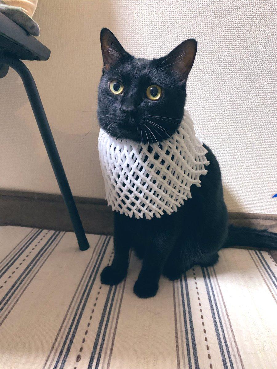 當你的貓想要成為埃及神貓的時候…… Ef26i1SVoAACS2i