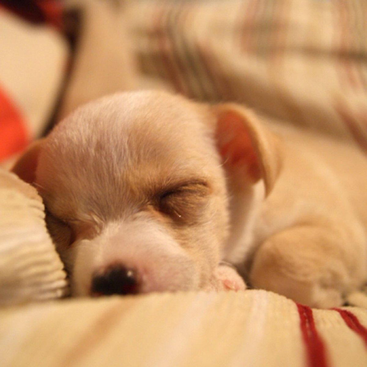 かわいいわんちゃん♪ #ハニーペット #HONEYPET #honeypet #犬 #ふわもこ部 #愛犬 #わんこ #いぬすたぐらむ #いぬ #ペット #犬のいる暮らし #ワンコ #イヌ #いぬのきもち #こいぬ #dog #dogsofinstagram #puppy #pet  #instagood #follow #followme https://t.co/56n2YOtvng