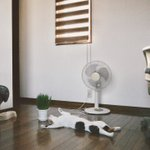 猫もぐったりする連日の暑さ。エアコン頑張って!