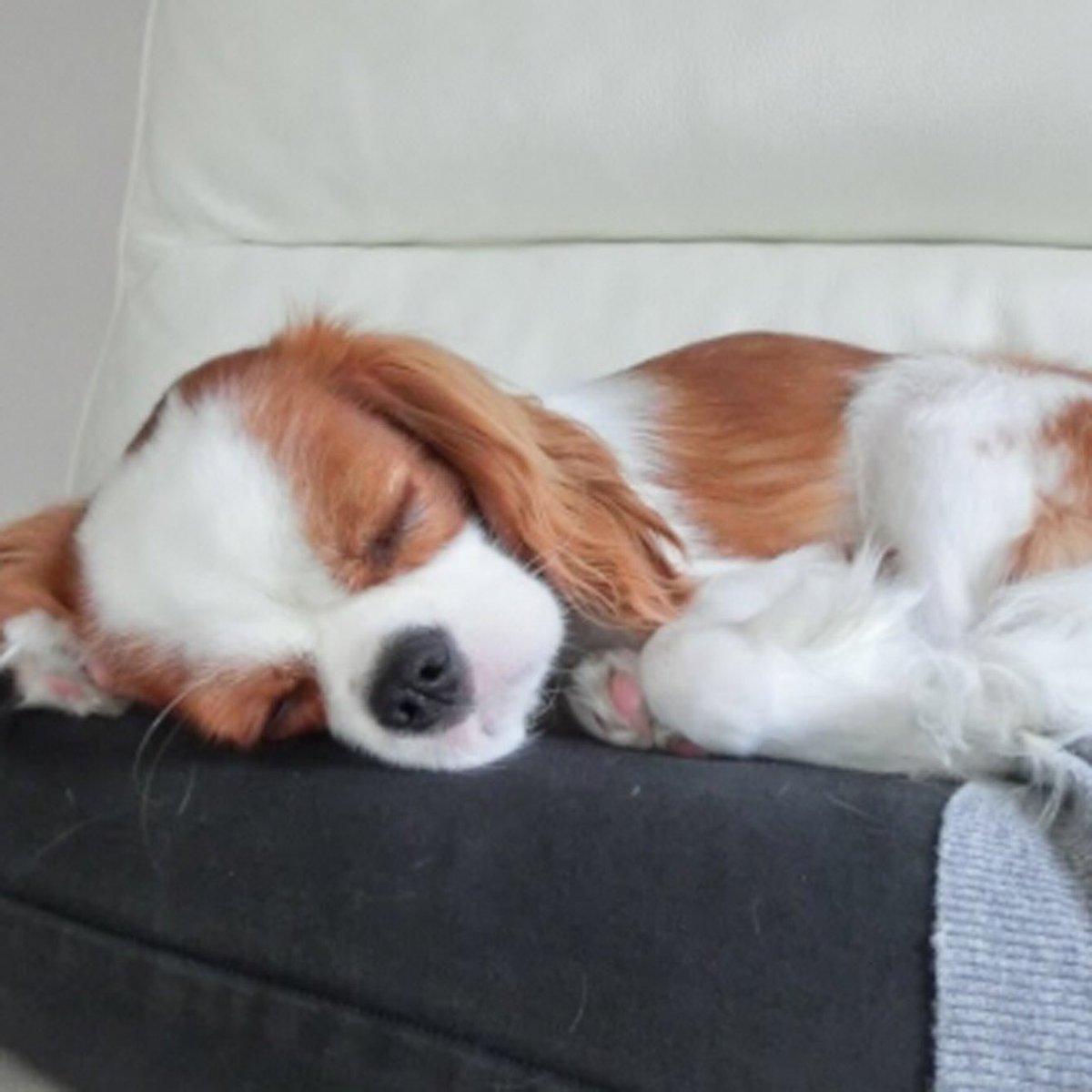 かわいいわんちゃん♪ #ハニーペット #HONEYPET #honeypet #犬 #ふわもこ部 #愛犬 #わんこ #いぬすたぐらむ #いぬ #ペット #犬のいる暮らし #ワンコ #イヌ #いぬのきもち #こいぬ #dog #dogsofinstagram #puppy #pet  #instagood #follow #followme https://t.co/FENoe9WFiF