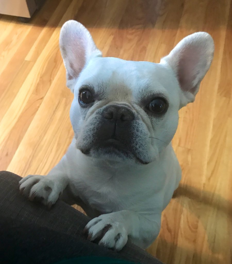 back home from the farm. miss my doggy cuzins! but lookin forward to some naps and snuggles. also my frend piggy missed me. #whereswaldo #frenchbulldog #dogsofinsta #boopmynosepic.twitter.com/VQPMFLBSwA
