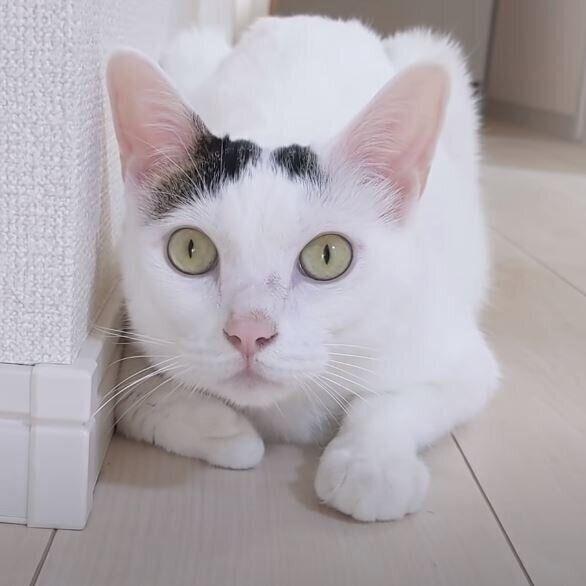 パパさんにおしゃべりする猫♪ かまってもらえなくて「アホォ~」?|ねこのきもちWEB MAGAZINE https://t.co/0pasgVakFK https://t.co/hNTjZCEDNn
