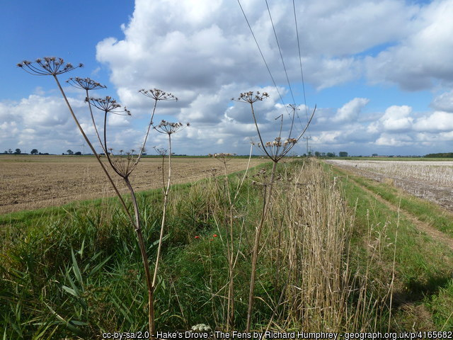 Hake's Drove - The Fens, west of March in #Cambridgeshire #GreatBritain https://www.geograph.org.uk/photo/4165682 #Geography #photography #walking #nature #farmingUK @CambridgeshireF @FascinatingFens @HerewardCountry @CambsGeology @MarchSociety Located in @OSleisure map square TL3595pic.twitter.com/BvG7Dfw24d