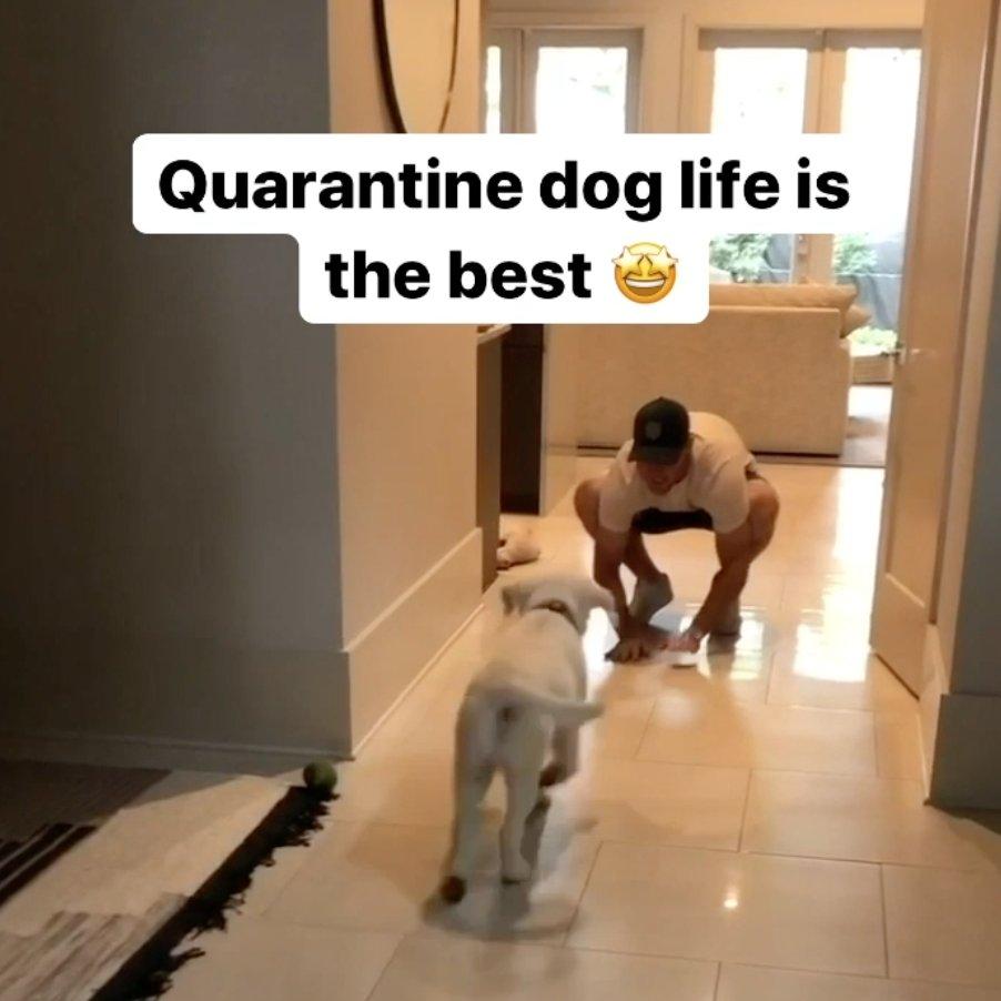 Quarantine dog life 🤣 😭 #Saints | @wil_lutz5