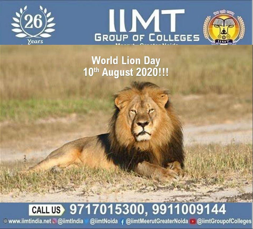 World Lion Day!! 10th August, 2020!!! . iimtindia.net/campaign-epape… . . #NAACaccreditedcollegesingreaternoida #WorldLionDay #lion #LionDay #UPSEEBestEngineeringcolleges #UPSEEengineeringcollegesingreaterNoida #AKTUaffiliatedcollegesingreaterNoida #aktuadmission2020