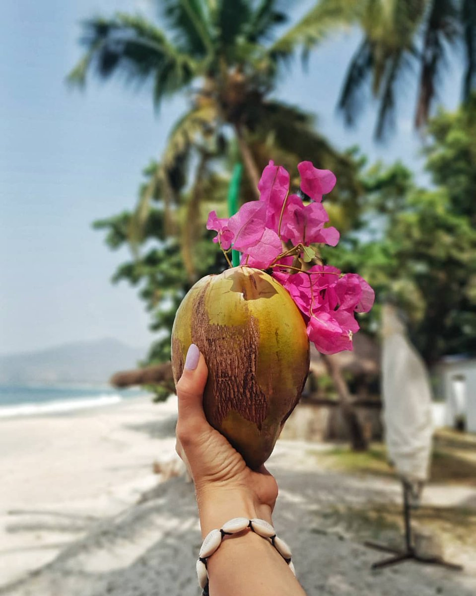 When you think of #breathtaking #beaches and refreshing coconut water you should definitely think #Salone!  IG: © thecurlycraze  #IPCTravelAgency #yourguidetosierraleone #beach #tropicalvibes #tropicalvacation #beachvacation #travel #travelphotography #SaloneTwitter https://t.co/HVE2qaoV9m