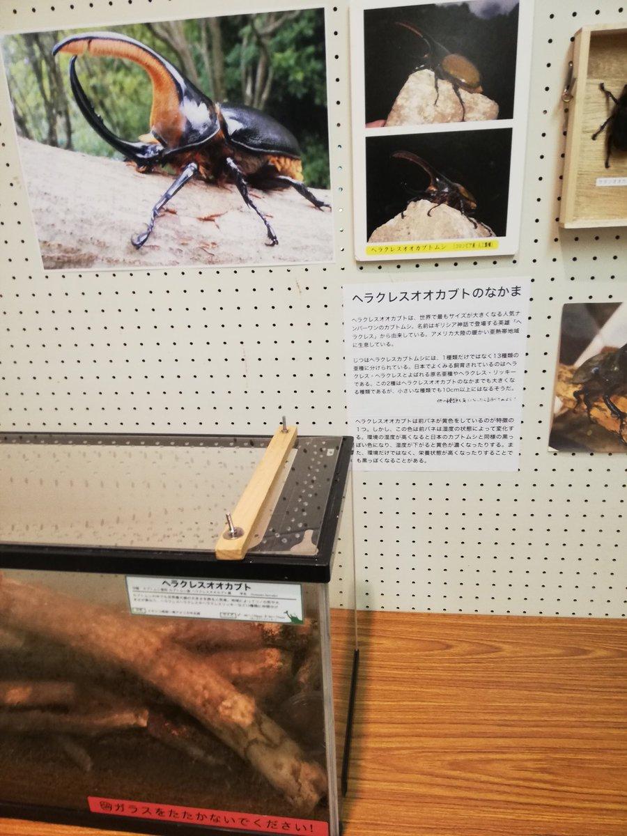 カブトムシ 種類 あつ森